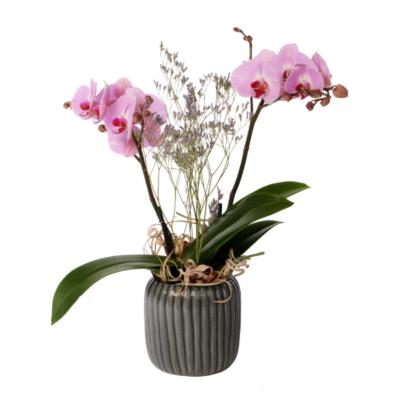 Linder_Blumen_Orchidee_grossblumig