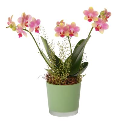 Linder_Blumen_Orchidee_kleinblumig