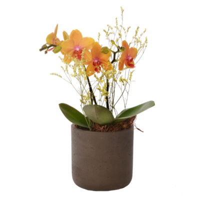 Linder_Blumen_Orchidee_orange