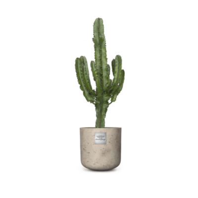 Linder_Blumen_Bruce_Euphorbia
