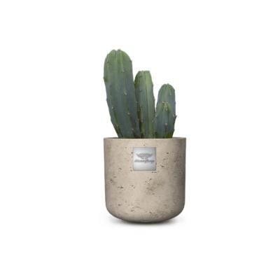 Linder_Blumen_Max_ Myrtillocactus